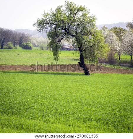 Monferrato panorama, springtime. Color image - stock photo