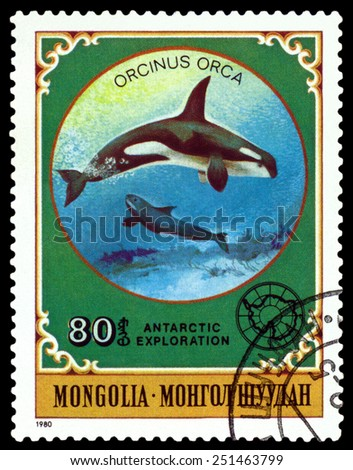 MONGOLIA - CIRCA 1980: a stamp printed by Mongolia  shows  Grampus,  Antarctic Animals and exploration,  circa 1980 - stock photo