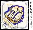 MONGOLIA - CIRCA 1964: A stamp printed by Mongolia shows mushroom, circa 1964. - stock photo