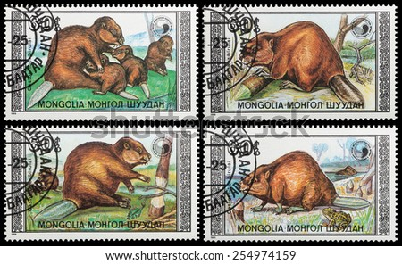 MONGOLIA - CIRCA 1989: A stamp printed in Mongolia - Eurasian beaver family , circa 1989 - stock photo