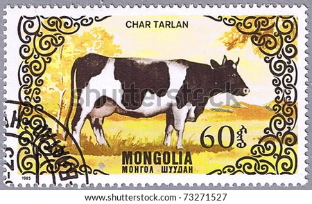 MONGOLIA - CIRCA 1985: A stamp printed in Mongolia shows a cow breed Char tarlan, a series devoted to cattle, circa 1985