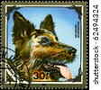 "MONGOLIA - CIRCA 1984: A Stamp printed in MONGOLIA shows image of a German Sheepdog from the series ""Dogs"", circa 1984 - stock photo"