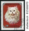 MONGOLIA - CIRCA 1979: stamp printed by Mongolia, shows cat, White Persian, circa 1979. - stock photo