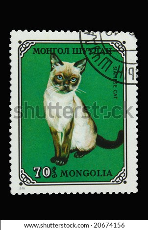 Mongolian postage stamp with Siamese cat - stock photo