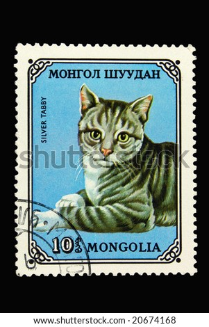 Mongolian postage stamp with silver tabby cat - stock photo