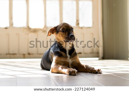 Mongrel Dog sits and looks expressing loneliness