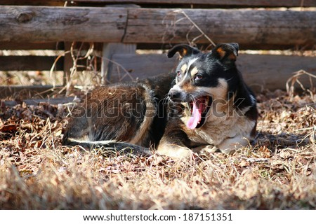 mongrel sleeping on the ground - stock photo