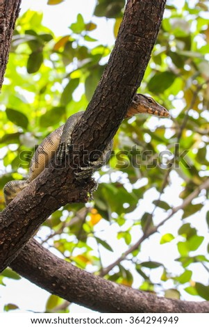 Monitor lizard ( Varanus salvator ) is sleeping on the tree - stock photo