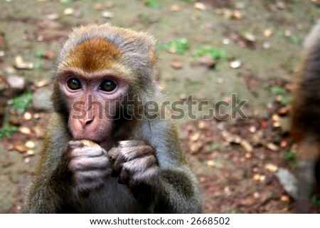 monkey - stock photo