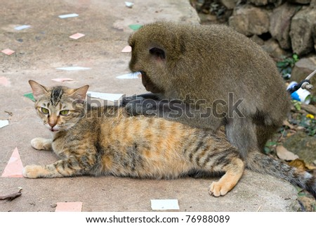 Monkey and cat - stock photo