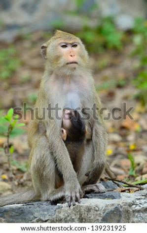 Monkey and son - stock photo