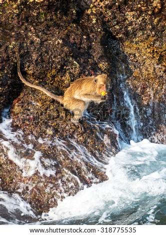 Monkey at the rocks of the Monkey island at Koh Chang, Thailand - stock photo