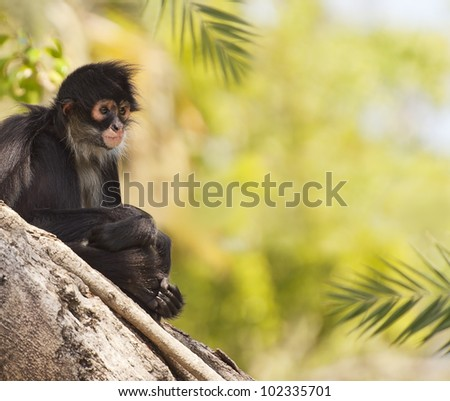 Monkey at the Zoo - stock photo
