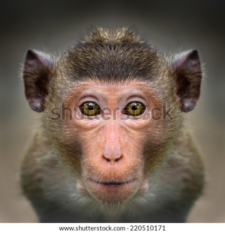 Monkey face close up - stock photo