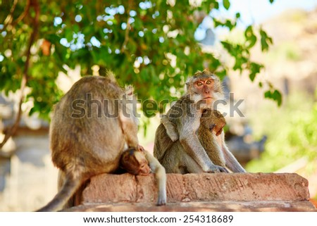 Monkey family in their natural environment, Bali, Indonesia - stock photo