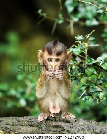 monkey forest child - stock photo