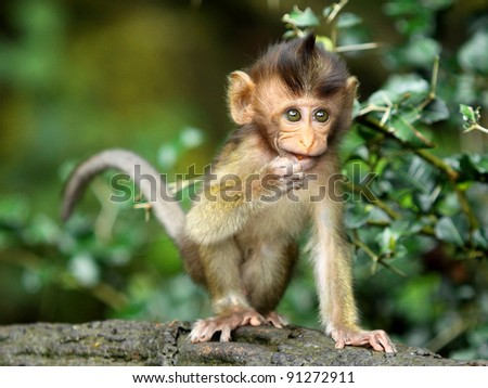 monkey forest child