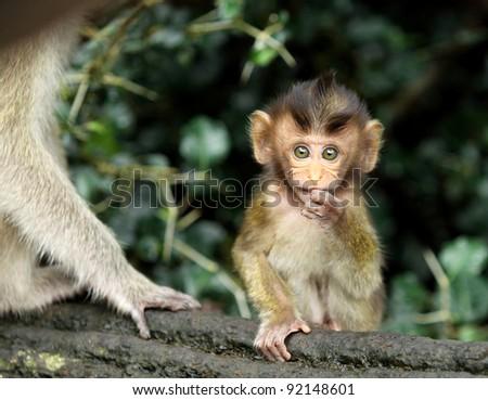 monkey forest child naughtily - stock photo