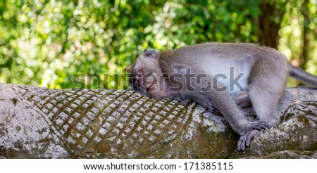 Monkey Forest, Ubud, Bali - Indonesia - stock photo