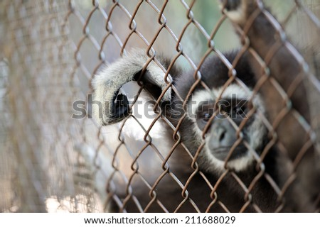 Monkey hand on the cage