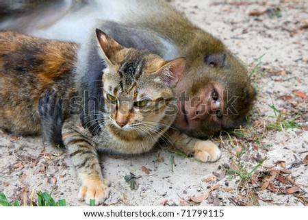 Monkey hugging cat - stock photo
