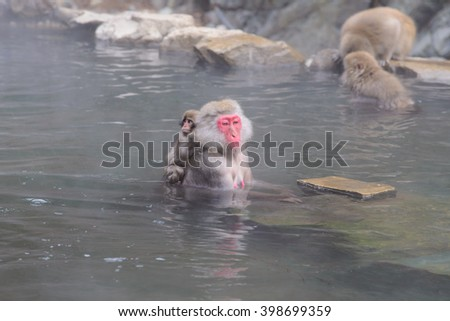 Monkey in a natural onsen (hot spring), located in Jigokudani Monkey Park or Snow Monkey, Nagono Japan.