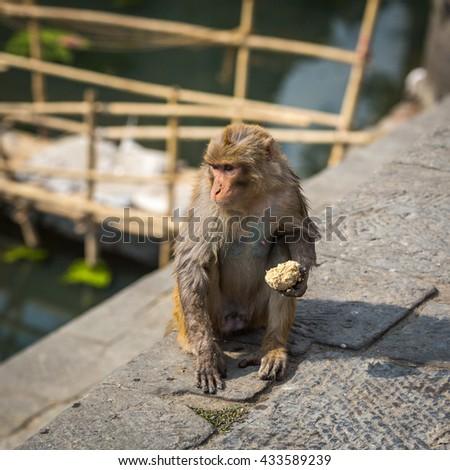 Monkey in a temple in Kathmandu - stock photo