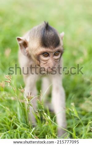 Monkey in garden - stock photo