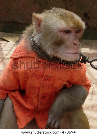 monkey in his shirt