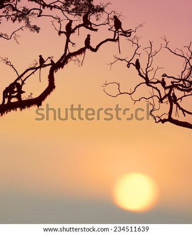 Monkey in the setting sun in the jungle - stock photo