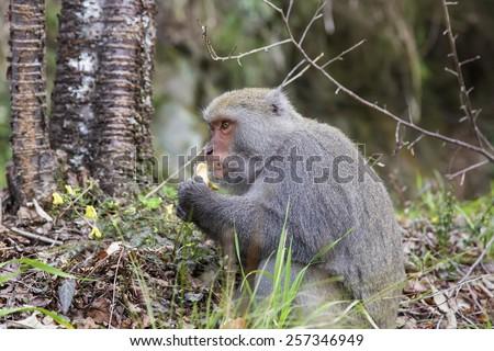 Monkey in the wild - stock photo