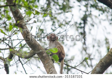 monkey is primates in mammalia ,mostly it catch branch on the tree in dry deciduous forest