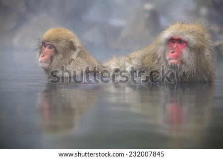 monkey is relaxation for adv or others purpose use - stock photo