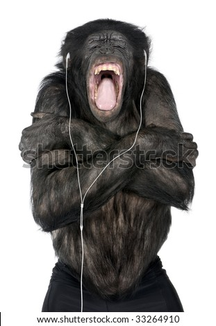 Monkey listening music with his white headset  in front of a white background (Mixed-Breed between Chimpanzee and Bonobo (20 years old))