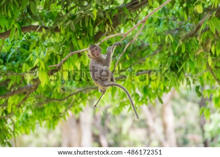 Monkey live in nature tropical forest, Thailand