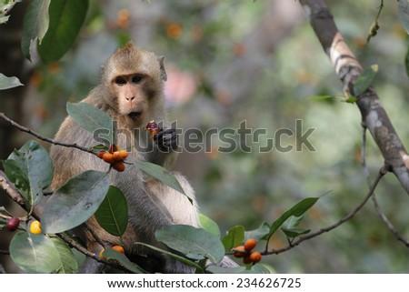 monkey look food on tree - stock photo