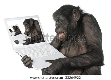 monkey looking at an other monkey on a computer screen (Mixed-Breed between Chimpanzee and Bonobo) (20 years old) in front of a white background - stock photo