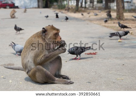 monkey , Monkey eating corn ,Lovely Animal