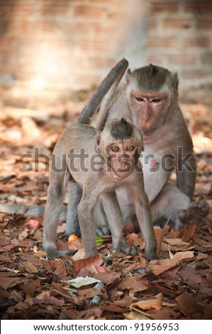 Monkey,Monkeys who have been living in the tropics