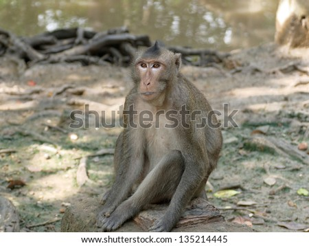 Monkey on a stone in a zoo