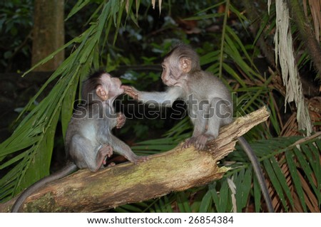 Monkey`s - stock photo
