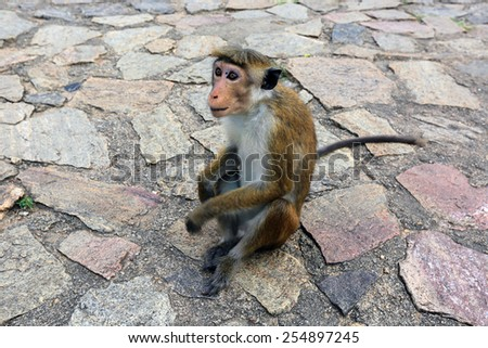 Monkey seat on stone pavement - stock photo