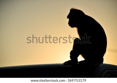 Monkey silhouette - stock photo