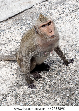monkey sit  on the street