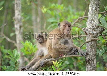 Monkey sit on the tree