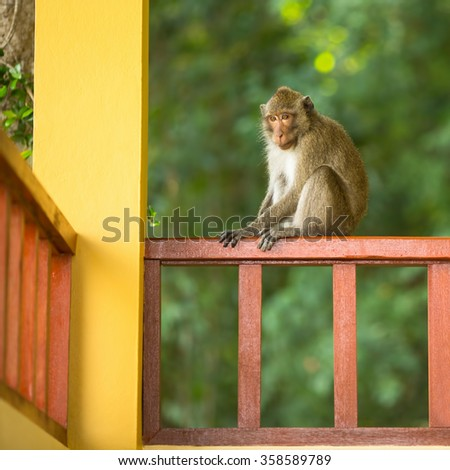Monkey sitting on the railing of the porch of the house.