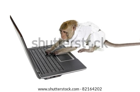 Monkey to learn to work at the computer - stock photo
