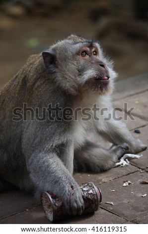 Monkey tongue out