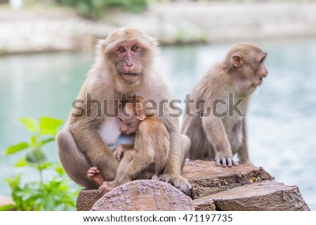 Monkey tropical forests.