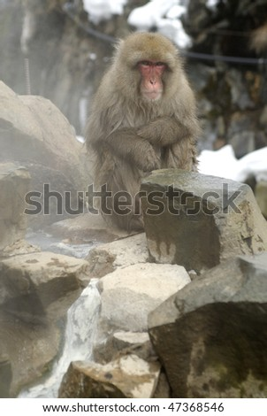 Monkey trying to keep warm next to natural hot spring stream